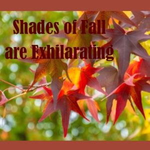 Fall Color Exhilaration